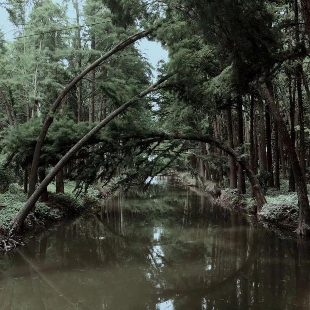 杭城周邊這些罕見的水上森林,10月去簡直美爆了!