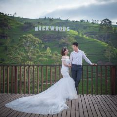 Macwood Tea Factory用戶圖片