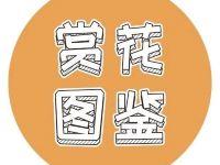 深圳又回溫了,獻上1月賞花地圖,週末浪起來!