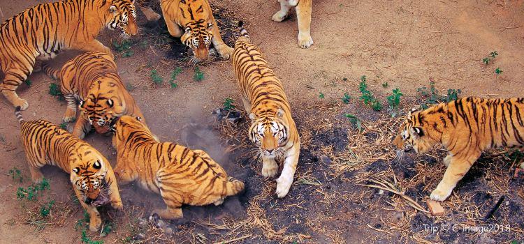 深圳野生動物園3