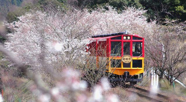 Sagano Romantic Train1