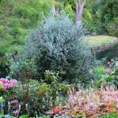 夢娜維爾花園用戶圖片