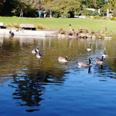 喬治斯特林公園用戶圖片