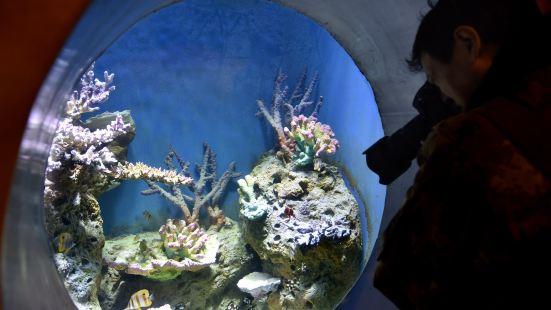 海底潛游區