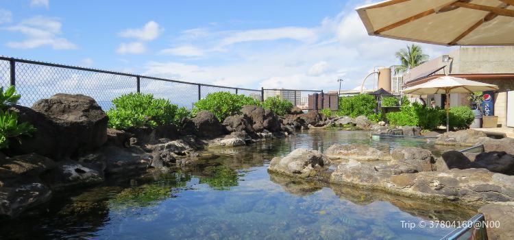 Waikiki Aquarium3