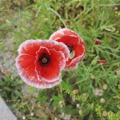 綿陽國際蘭花主題公園用戶圖片