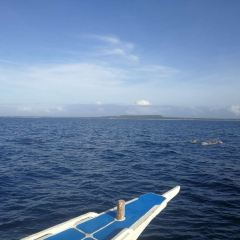 Bohol Dolphin Discoveries User Photo