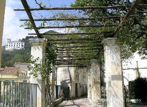 Minerva's Garden