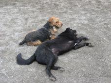 Best Friend Dog Park-橙县
