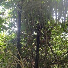 博鼇鄉村公園用戶圖片