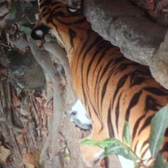 마닐라 동물원 및 식물원  여행 사진
