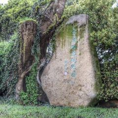 Baoyan Ecological Sightseeing Garden User Photo