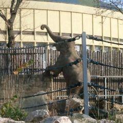 布達佩斯動植物園用戶圖片