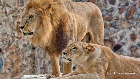 Zoológico de Cali