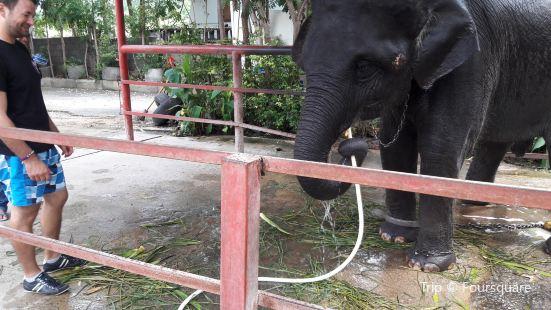 霍特薩丁大象基金會