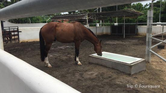 Royal Sporthorse Bali