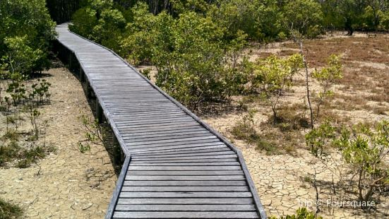 The Jack Barnes Bicentennial Mangrove Boardwalk