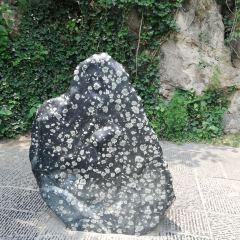 洛陽牡丹石用戶圖片