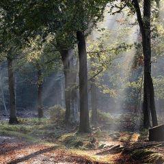 Saxon Switzerland National Park (Sachsische Schweiz National Park) User Photo