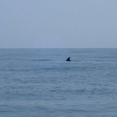 Sealife User Photo