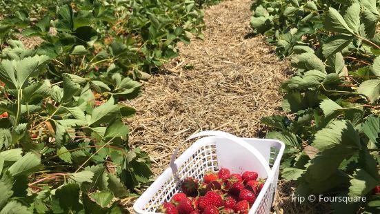 Buckhorn Berry Farm