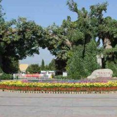 Baoding Botanical Garden User Photo