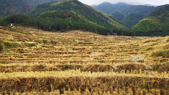 歐家梯田農莊