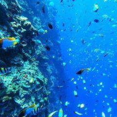 詩巴丹潛水用戶圖片