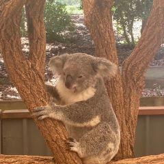 雪梨野生動物園用戶圖片