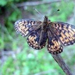 蝴蝶溝用戶圖片