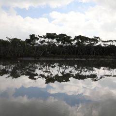 東寨港紅樹林保護区のユーザー投稿写真