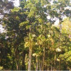 甘清雨林瀑布用戶圖片