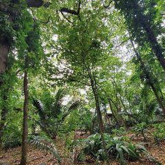Jardin Botanico Medellin User Photo