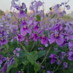 雲門山風景区のユーザー投稿写真