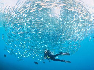 Sanya Bay Diving