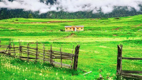 魯朗花海牧場
