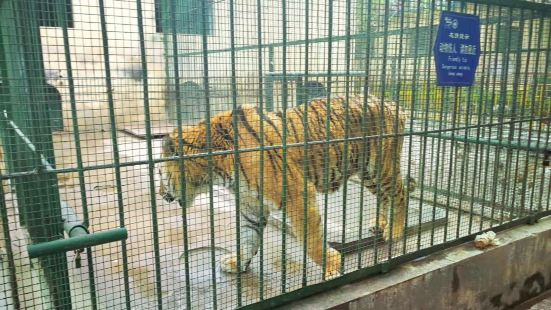 Weifang Zoo