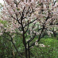 Ancient Pear Park User Photo