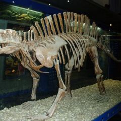 The Paleozoological Museum of China User Photo