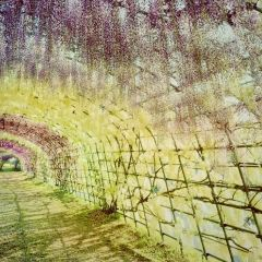 河內藤園用戶圖片