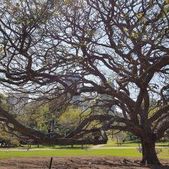 City Botanic Gardens User Photo