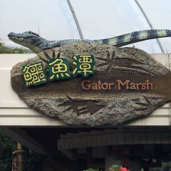 Gator Marsh User Photo