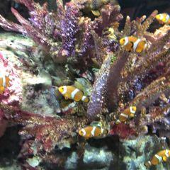 曼谷暹羅海洋世界用戶圖片
