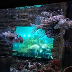 Aquaria KLCC User Photo