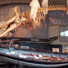 Whaling Museum用戶圖片