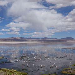 Laguna Colorada User Photo