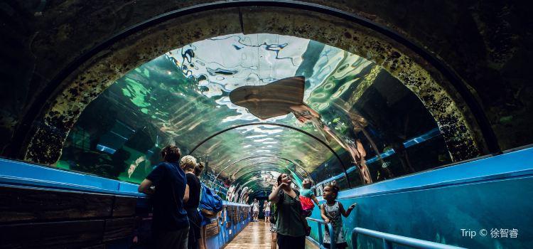 悉尼水族館3