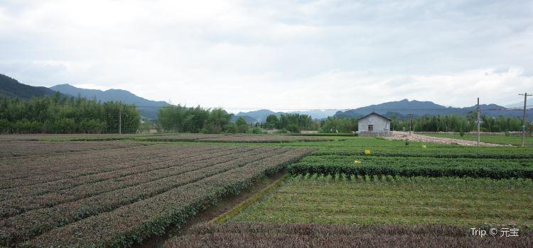 松陽大木山騎行茶園景區1