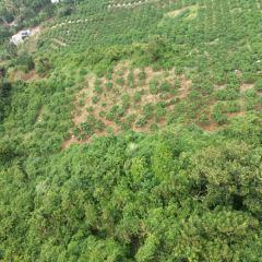 Hainan Tribal Tropical Orchard User Photo