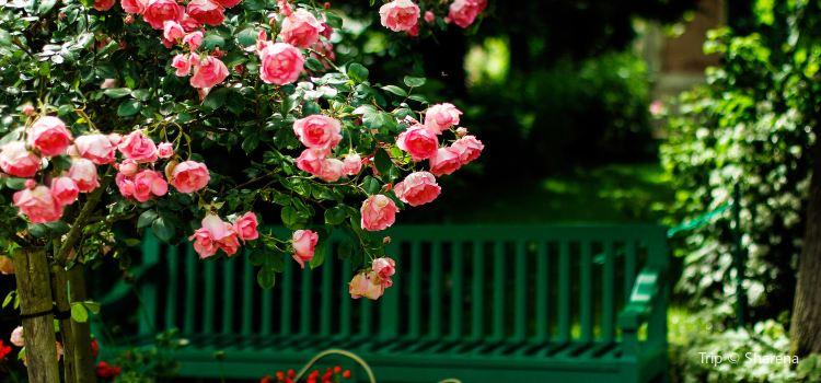莫奈花園1